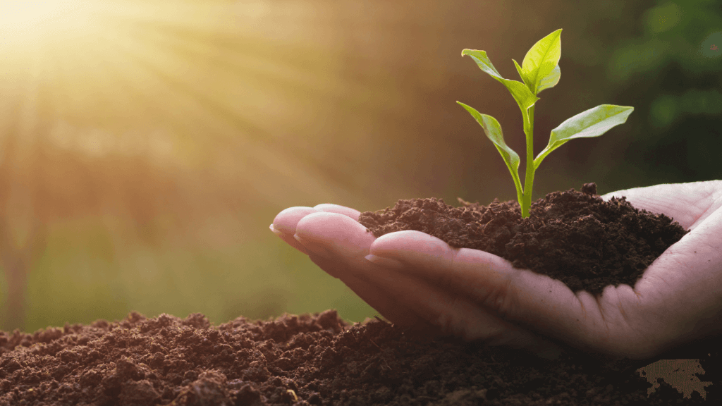 Holding a handful of soil with a stem growing from it symbolising growth